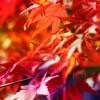 紅葉なiPhone壁紙