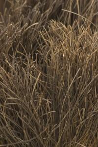 敷き詰められた大量の藁風iPhone壁紙